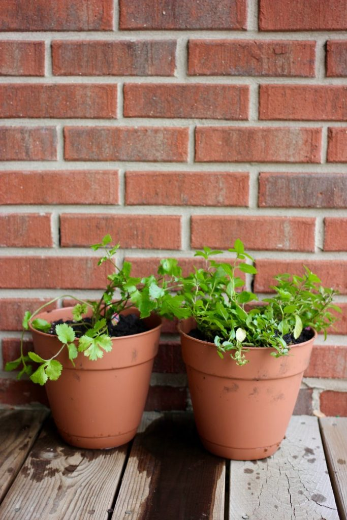 potted herb garden on balcony