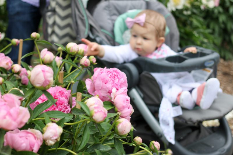 Stopping to smell the peonies - Nichols Arboretum Peony Garden | Crazy Together blog